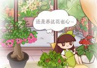 這5種花,一年四季都能開,新手小白也能養爆盆