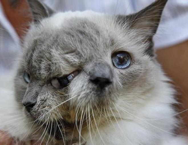 雙面貓剛出生就被建議安樂死,最後成了大家的開心果