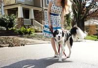 遛狗變成狗遛人,訓犬師給出3個技巧,讓狗狗養成隨行好習慣