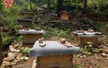 大山深處的人家,隱居於世養蜜蜂賣蜂蜜,生活自給自足你羨慕嗎?