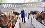 誰說農業不是前途?這些年放棄高薪厚職迴歸田園的精英們