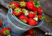 春季,有哪些時令水果?除了直接吃,哪些吃法或做法別具一格呢?