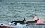 海豚真的有自己的語言系統麼?