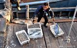 青島碼頭 秋鮁魚上岸23元一斤 大姐推薦一魚兩吃 實惠嚐鮮兩不誤