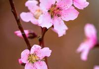 木槿花開是少年情懷