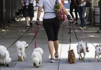 來測測你的愛狗指數,具備十條以上才合格哦!