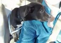 狗狗和領養人的第一次見面,幸福的不敢相信!