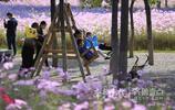 長假第一個好天!植物園內遊客醉花叢