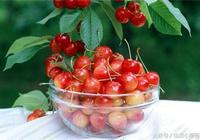 吃櫻桃季節馬上來臨,為什麼甜美可口的小櫻桃這麼貴?