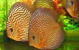 動物圖集:五彩神仙魚