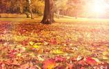 秋冬季節身體冰涼怕冷?教你製作純陽艾草墊,讓你坐在陽氣之上