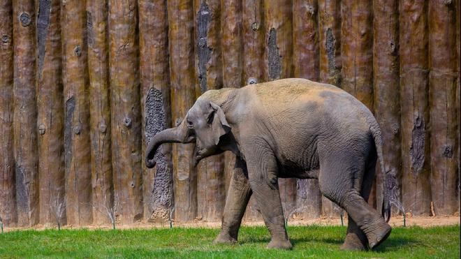 濟南野生動物園動物電腦電腦壁紙!