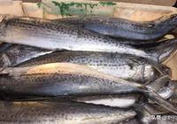馬鮫魚和青佔魚,你能分辨出來嗎?