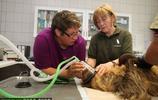 樹懶也有牙病?德國哈雷動物園樹懶接受牙醫治療