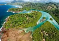 海南紅樹林,野蠻生長的生態圈