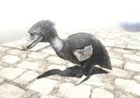 方舟生存進化:不會飛的駭鳥,但是可以靠它的小翅膀滑翔!