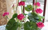 別傻了還買綠蘿!懂花人都在養這6種花卉盆栽,清香怡人美麗高雅