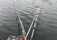 釣不到魚,那是因為你犯了釣魚這四大忌,看看你中招沒有?