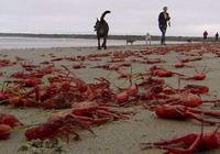 澳洲又一動物氾濫成災,中國吃貨:真幫不了!