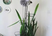 主人給家裡的貓買了新爬架,它也不怎麼用,直到有天才發現……