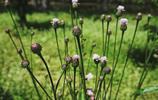 圖蟲風光攝影:萬物生長~