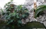 北京動物園的兩棲爬行動物館