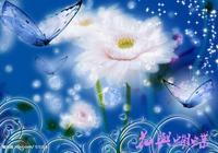 蝴蝶花中飛,花為蝴蝶媚