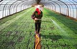 綠葉蔬菜價格比過年高兩倍  直接吃不起