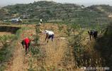 大山裡農民靠天吃飯,種植了一畝半小麥收入堪憂,看看他們怎麼說