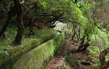 風景圖集:馬德拉群島