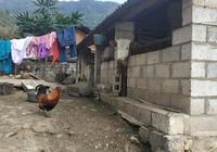 山裡的生活還是很美好的,希望能幫助我的家鄉扶貧。