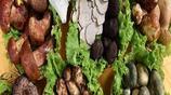 這5種美味且營養的野生菌,你吃過幾種呢?