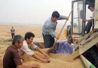 玉米跌,玉米跌,玉米跌完,小麥跌?