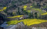 鳳堰古梯田為陝西省重點文物保護單位、國家水利風景區、森林公園
