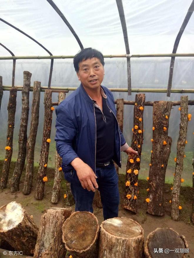 """陝西大山裡農民,讓一萬五千根爛木頭長出了""""金子"""",年收入百萬"""