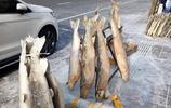 東北小城零下30幾度滿街凍魚堆成山,小哥喜歡狗魚美女最愛吃鰲花