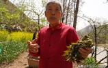 山西農村73歲老人蝸居深山,耕種2畝薄田,看她生活成啥樣