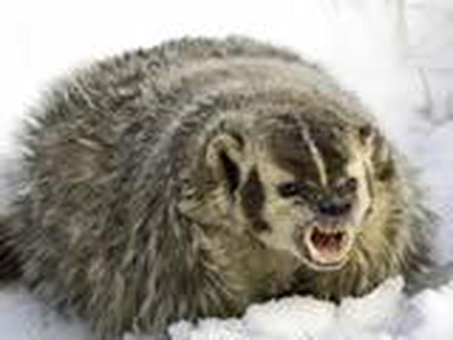 動物圖集:嬉戲的動物
