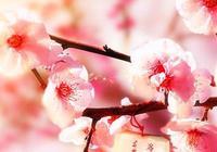 第三期:姓氏手機壁紙,桃花朵朵開