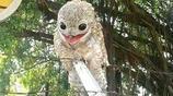 村頭飛來大眼睛笑面鳥有點像神鵰俠侶中的雕 令人害怕