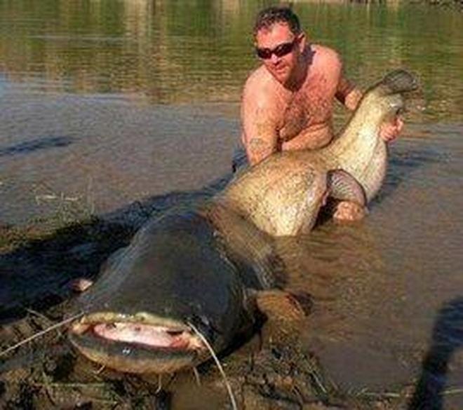 直擊國外鯰魚氾濫,德國男子20分鐘捕獲2條2米大鯰魚 組圖