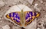 蝴蝶,漂亮的蝴蝶,太招人喜歡了!