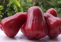 蒲桃是有什麼功效的水果呢