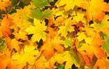 植物攝影|一葉知秋,轉眼就夏去秋來,你家鄉的葉子黃了嗎?