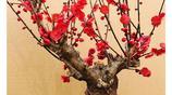 越來越多人不養富貴竹!換這幾種適合擺在客廳的盆栽,易活還招財