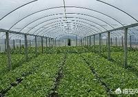 在農村包地種植大棚,效益怎麼樣?需要注意什麼?