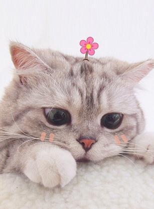 發病快、易忽視、貓痛苦、難治療的貓尿路結石,你急需重視