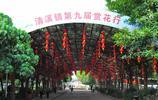 隨拍公園 - 東莞 清溪大王山森林公園 野生禾雀花將成為當季主角