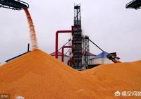 市場預期玉米進口將重啟,未來玉米價格真的會大跌嗎?你怎麼看?