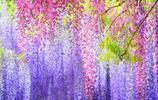 """你家陽臺有空嗎?把這個""""盆栽""""帶回家!讓你家裡美如仙境"""